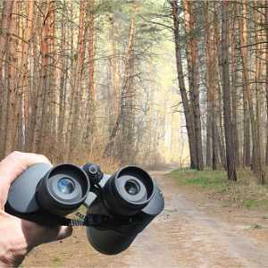 binoculars-in-mans-hand-on-background-of-pine-coniferous-forest-in-picture-id1256114629